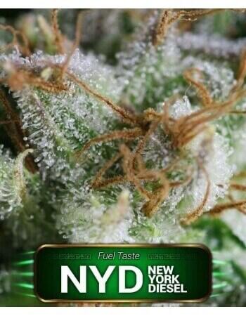 NYD (New York Diesel)