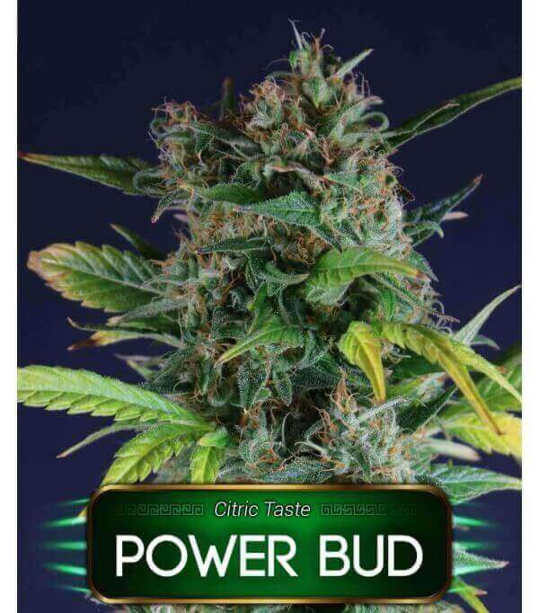 Power Bud