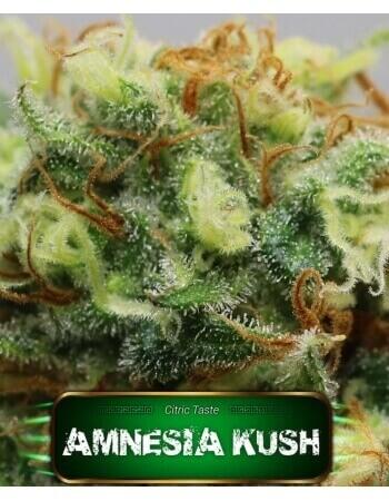 Amnesia Kush