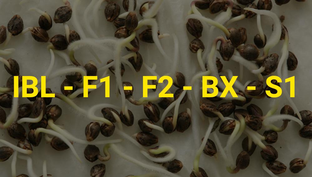 nomenclaturas semillas