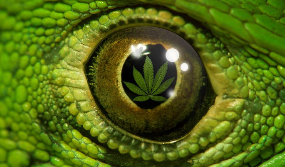 Mariguana, marihuana, cannabis, mota... Nombres mil