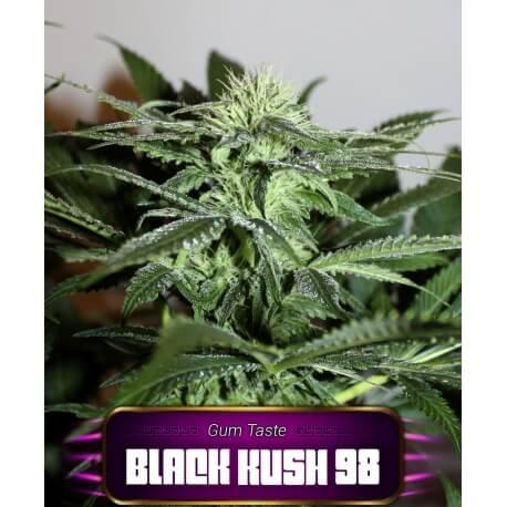 black kush 98 geaseeds