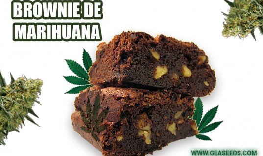 Brownie de cannabis
