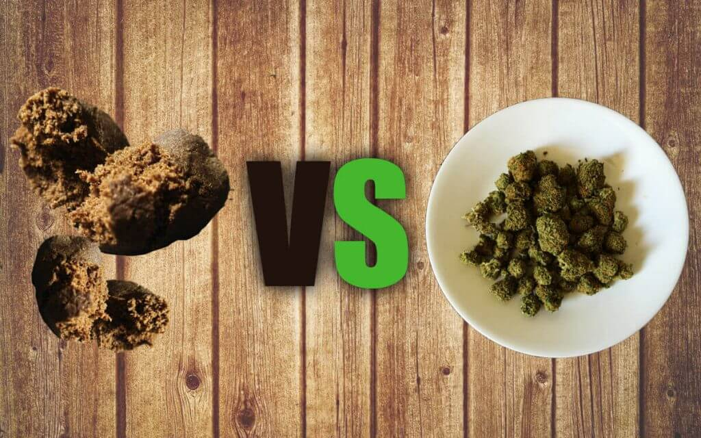 hahcis v.s marihuana