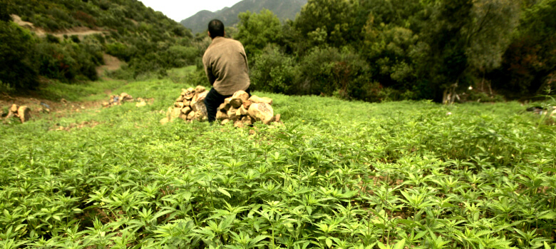 marruecos cannabis
