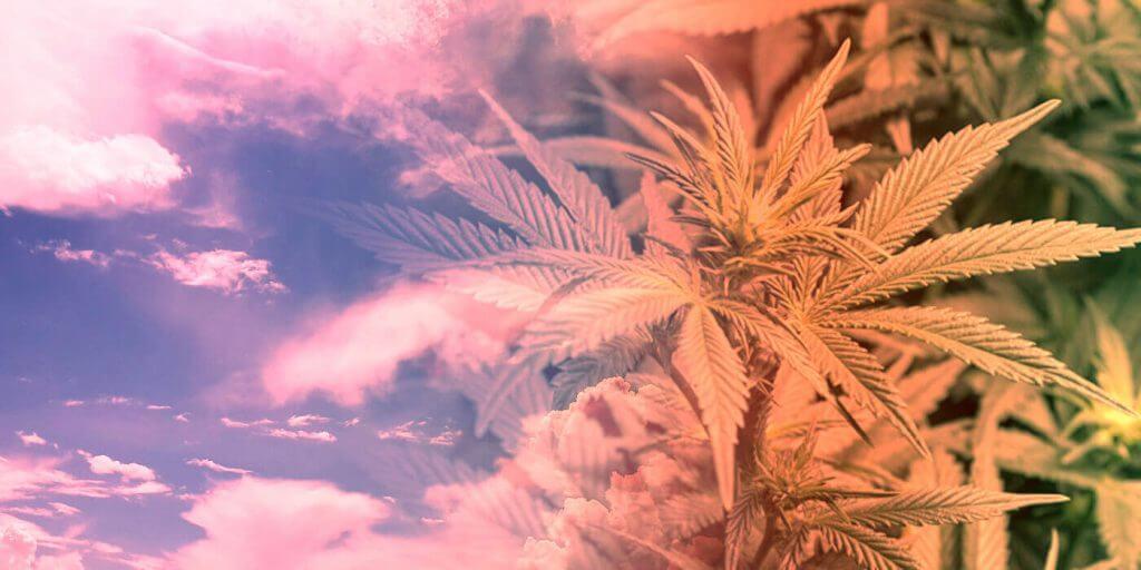 Beneficios de la marihuana Orexigeno