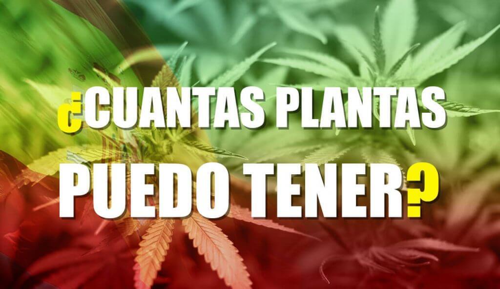 cuantas plantas de cannabis puedo tener