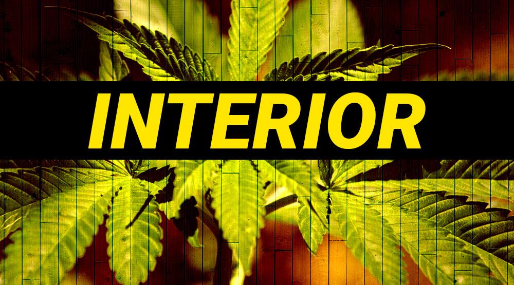 Cultivo marihuana autofloreciente for Cultivo interior marihuana