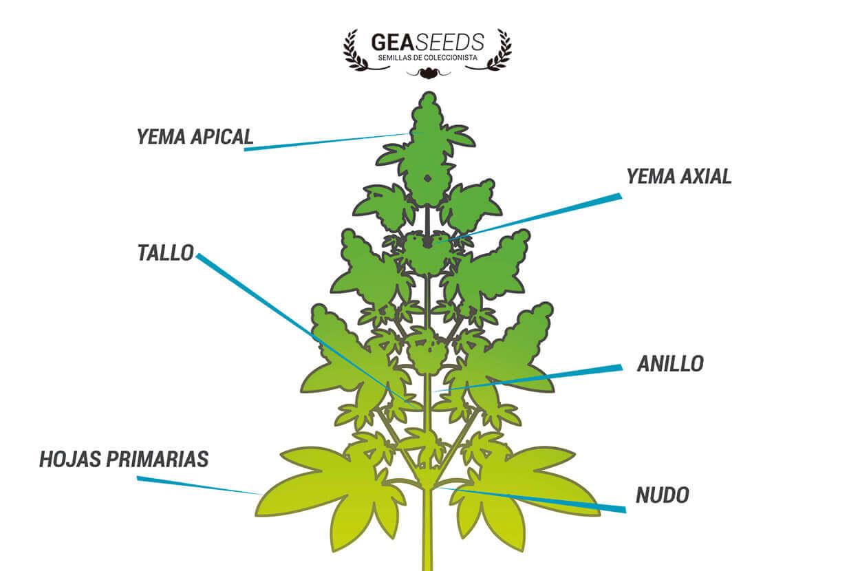 Reproduccion asexual en plantas estacas fuerte