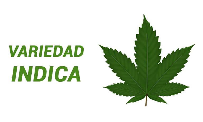 marihuana tipo indica