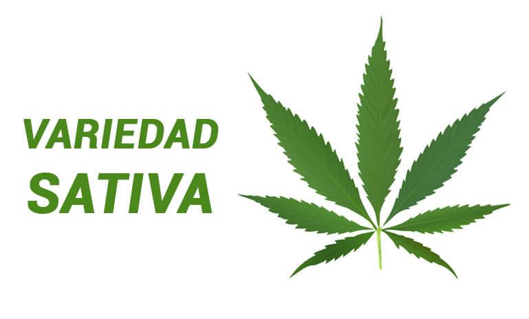 tipo de marihuana variedad sativa