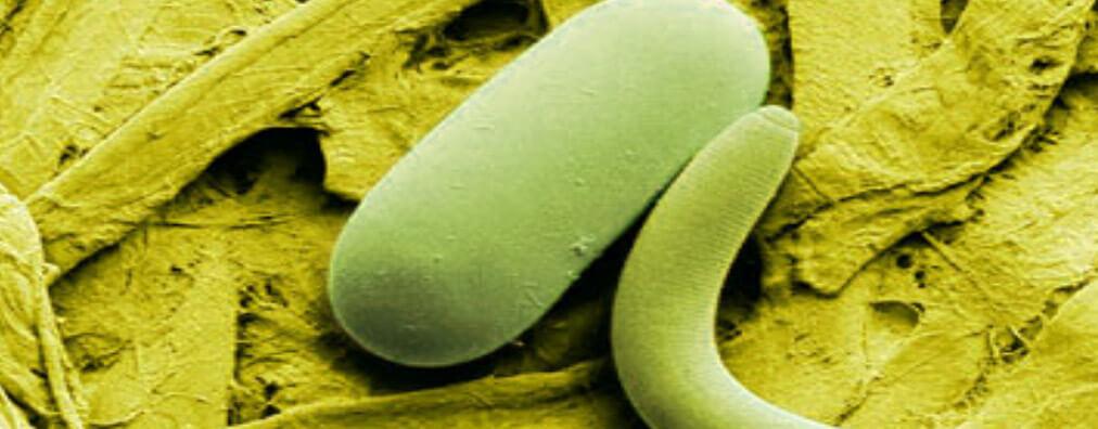 Los nematodos