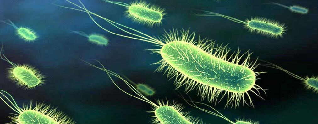 Les protozoaires