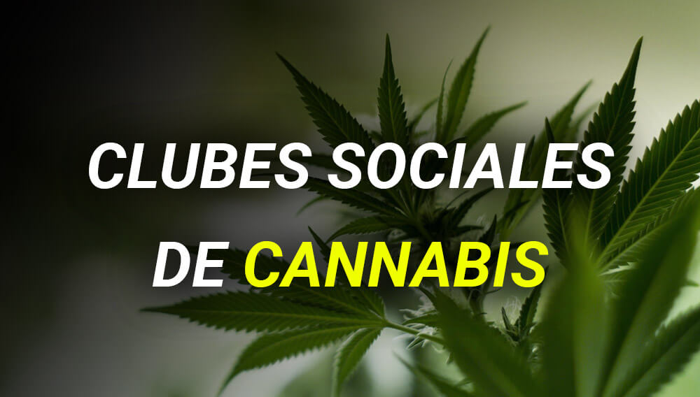 club-cannabis-blog