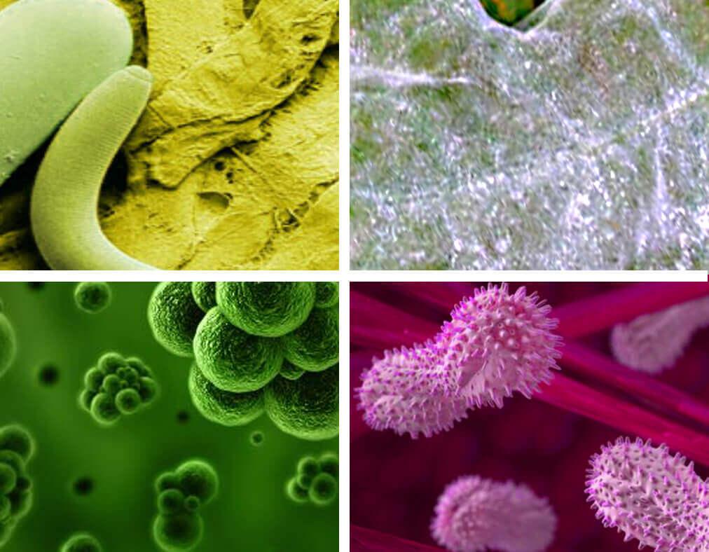 hongos virus bacterias nemátodos