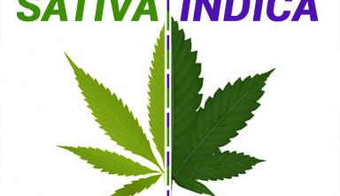 La diferencia entre cannabis índica y sativa