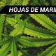 hojas-marihuana-blog
