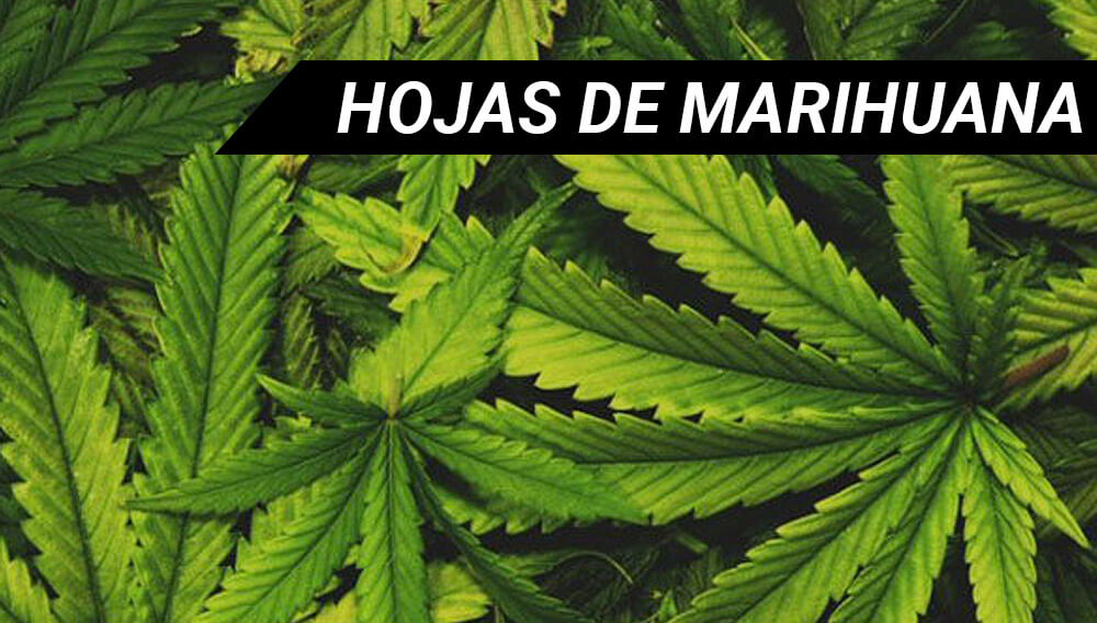 Fotos Piolas De La Marihuana O Imagenes Piolas Fotos