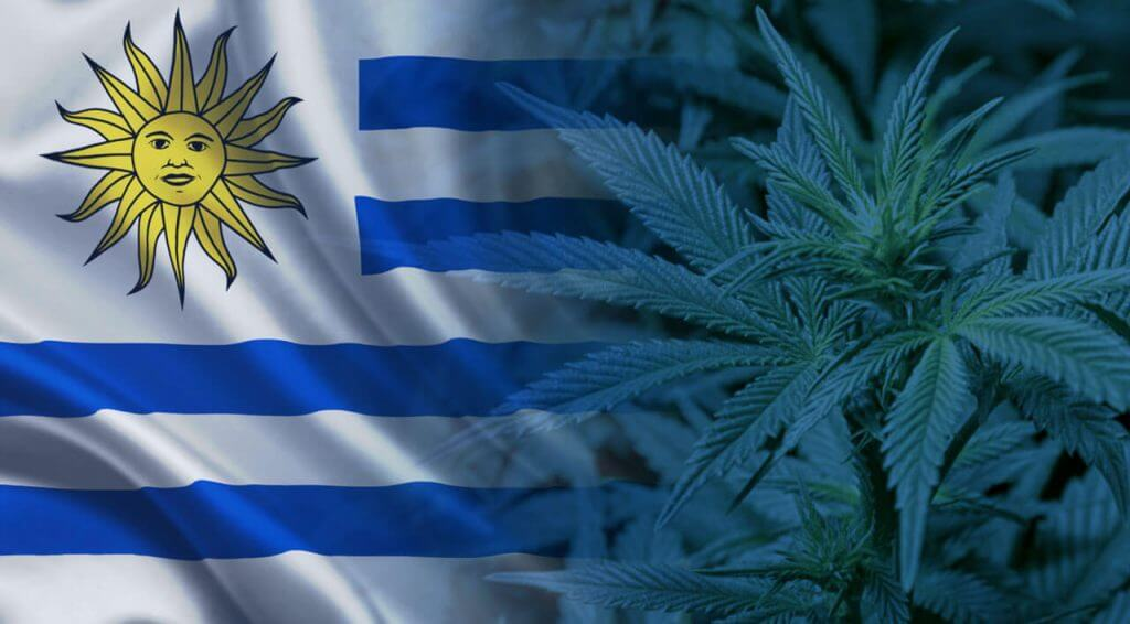 legal status of marijuana in uruguay an evolving process