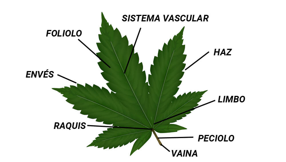 Hoja De Marihuana Imagenes Hojas De Marihuana Cannabis