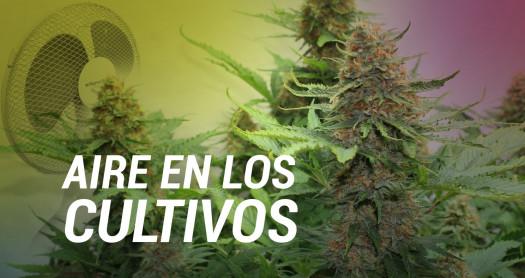 aire en cultivos marihuana