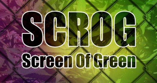 scrog