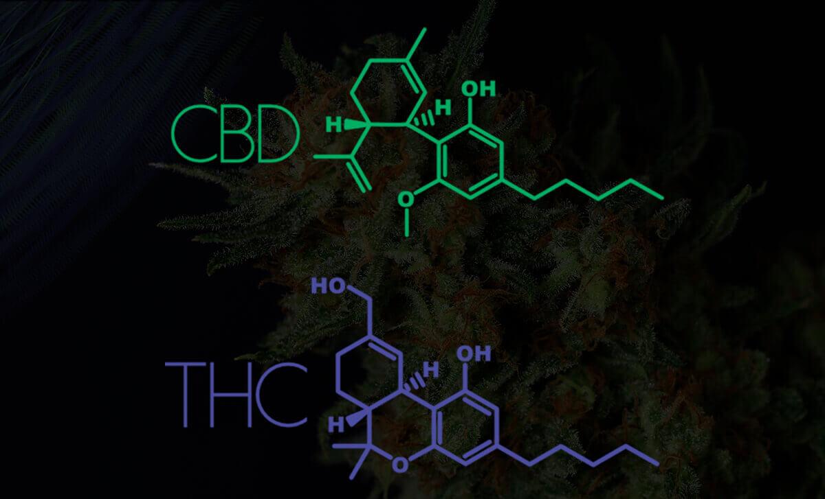 THC CBD quimica