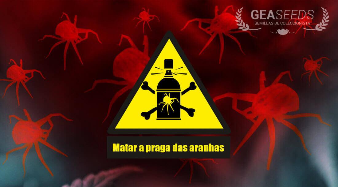 Matar a praga aranhas