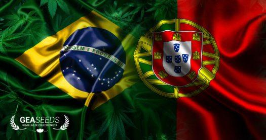 brasil portugal geaseeds