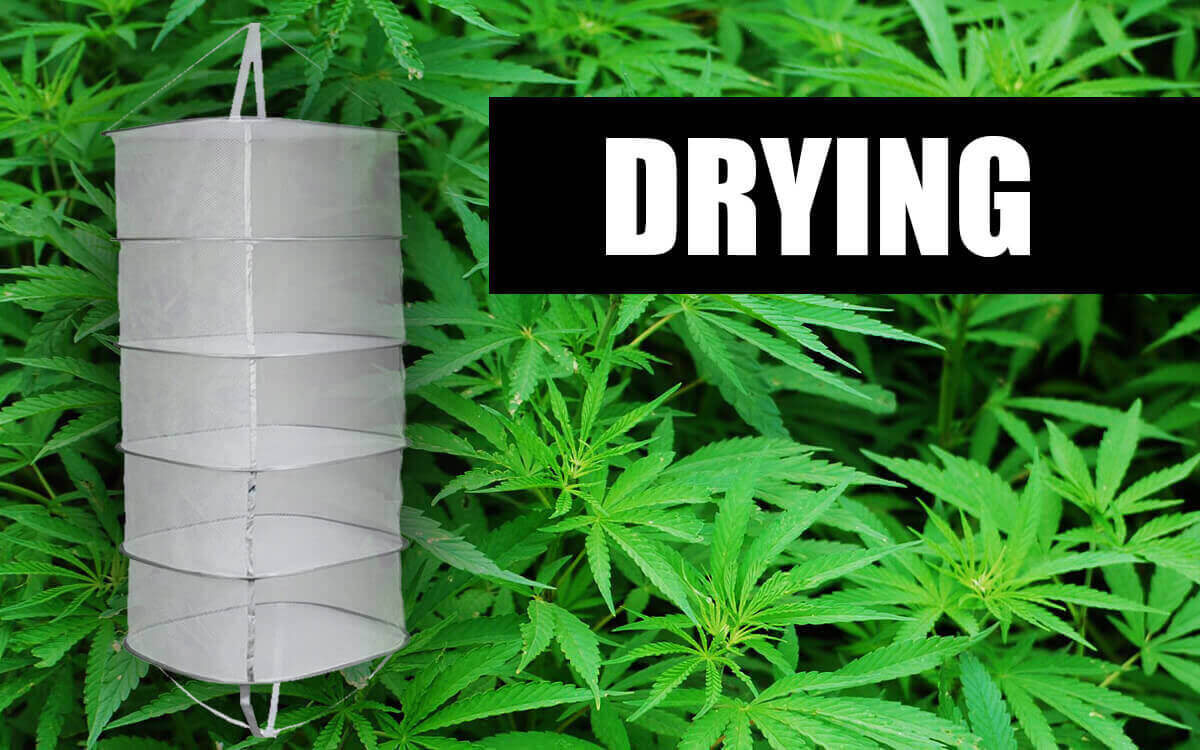 Drying mesh