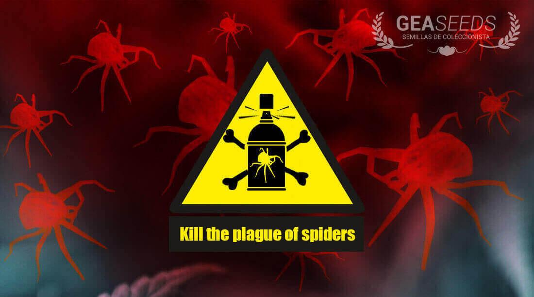 kill plague spider
