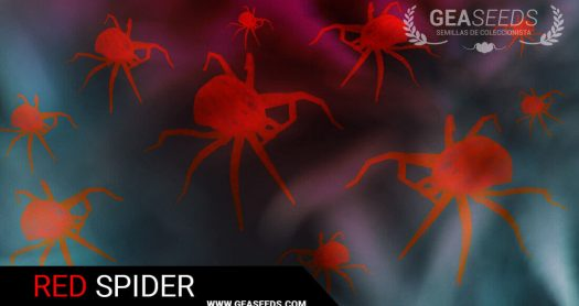 THE RED SPIDER – HOW TO KILL AND PREVENT IN CROPS