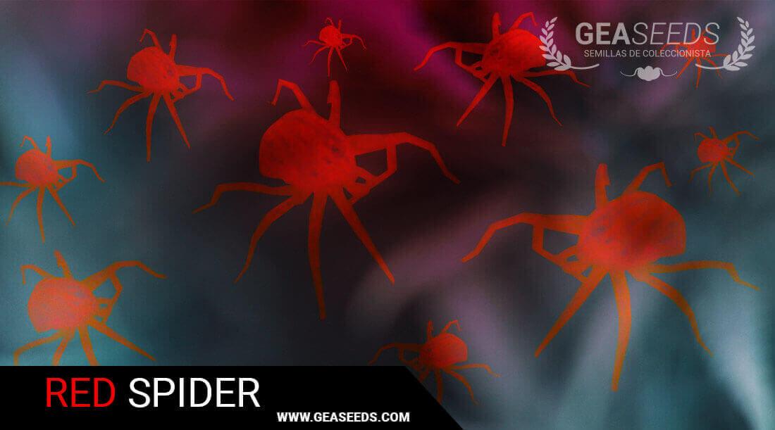 Red spider plague
