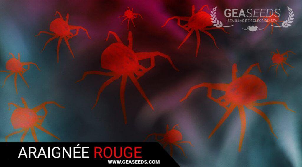 l 39 araign e rouge comment la tuer et pr venir son apparition dans les cultures. Black Bedroom Furniture Sets. Home Design Ideas