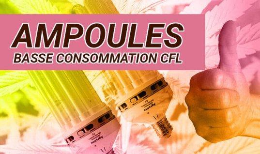 CULTURE EN INTÉRIEURE AVEC DES AMPOULES CFL À FAIBLE CONSOMMATION