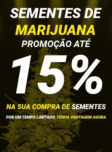offre dans les graines de marijuana