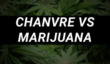 DIFFERENCES ENTRE LE CHANVRE ET LA MARIJUANA