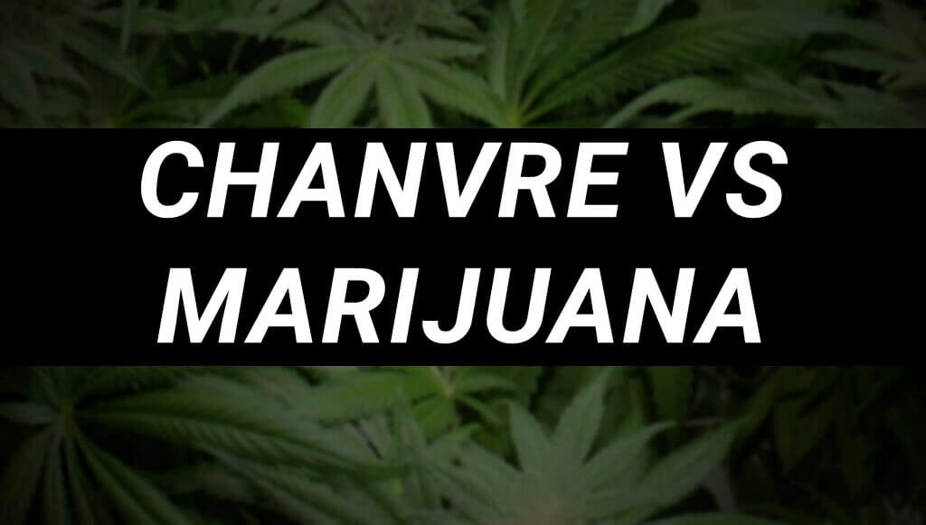 chanvre vs marijuana