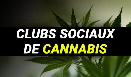 CLUBS SOCIAUX ET ASSOCIATIONS DE CONSOMMATEUR DE CANNABIS
