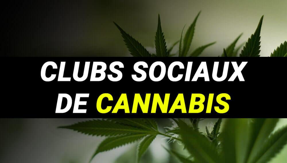 clubs sociaux de cannabis