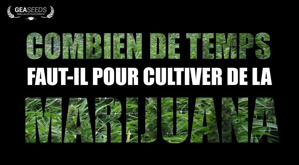 Combien de temps faut-il pour cultiver de la marijuana?