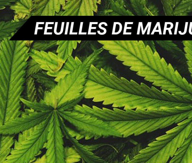 FEUILLES DE MARIJUANA | CANNABIS