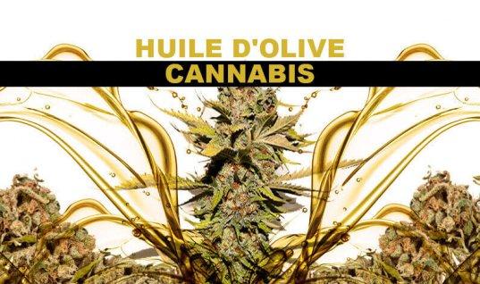HUILE D'OLIVE AU CANNABIS – HUILE DE MARIJUANA