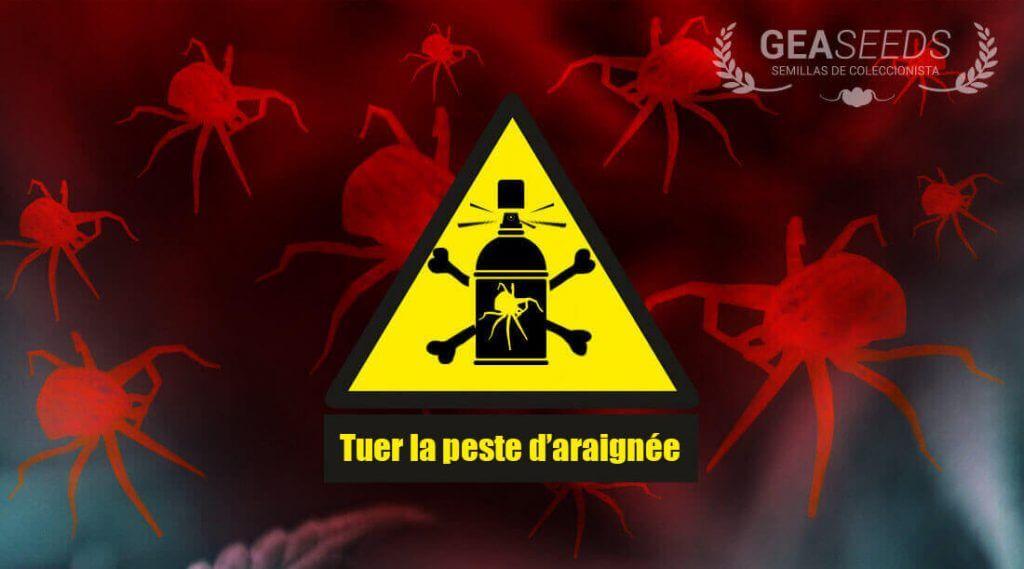 Tuer la peste d'araignée