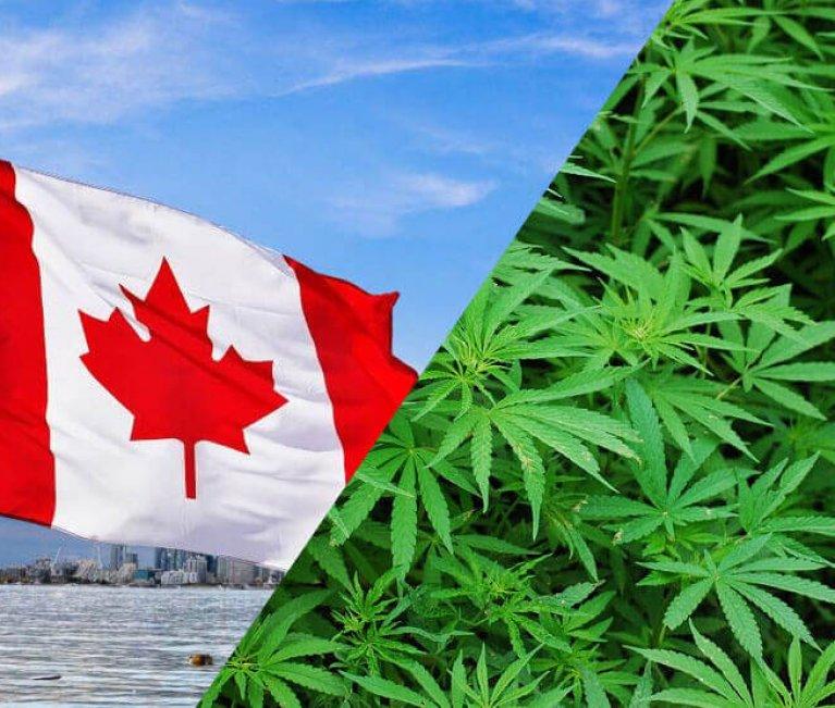 canada y la marihuana