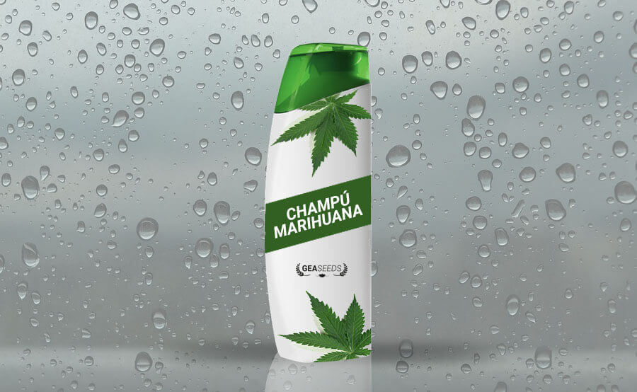 Shampoo de marijuana