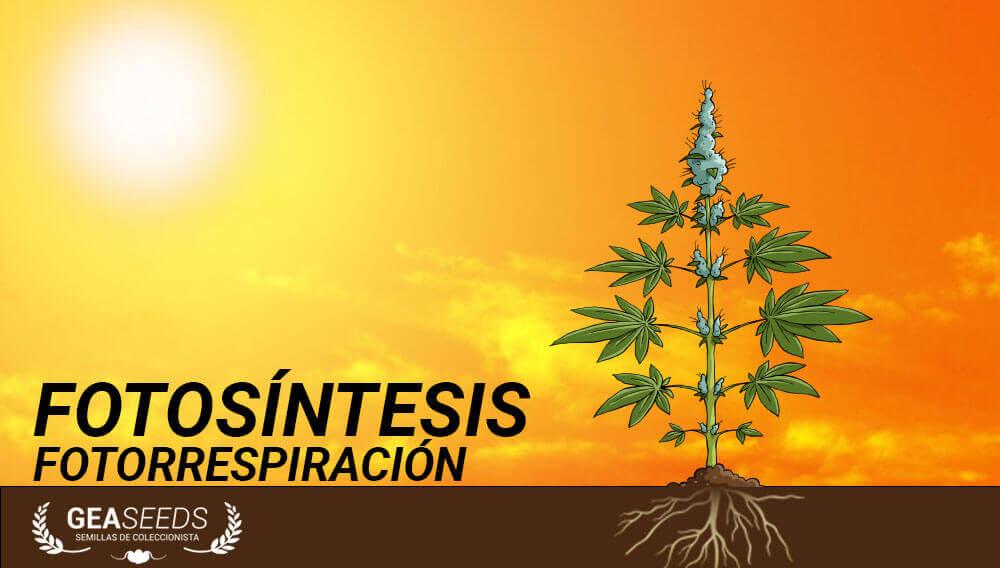 fotosíntesis fotorrespiración