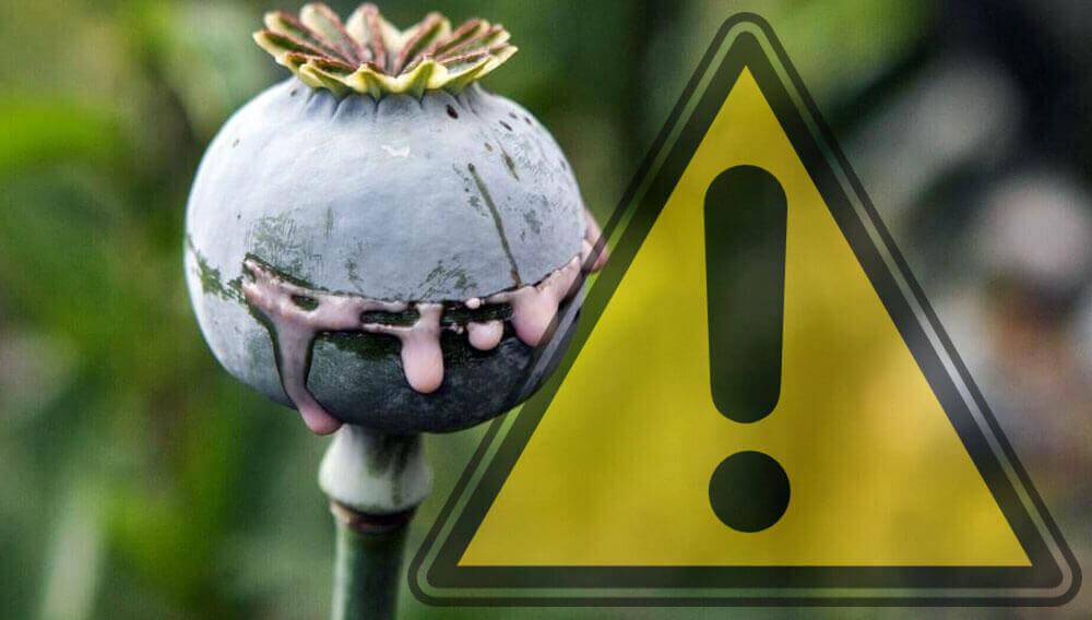 peligro del opio