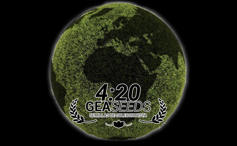 420 mundo gea seeds