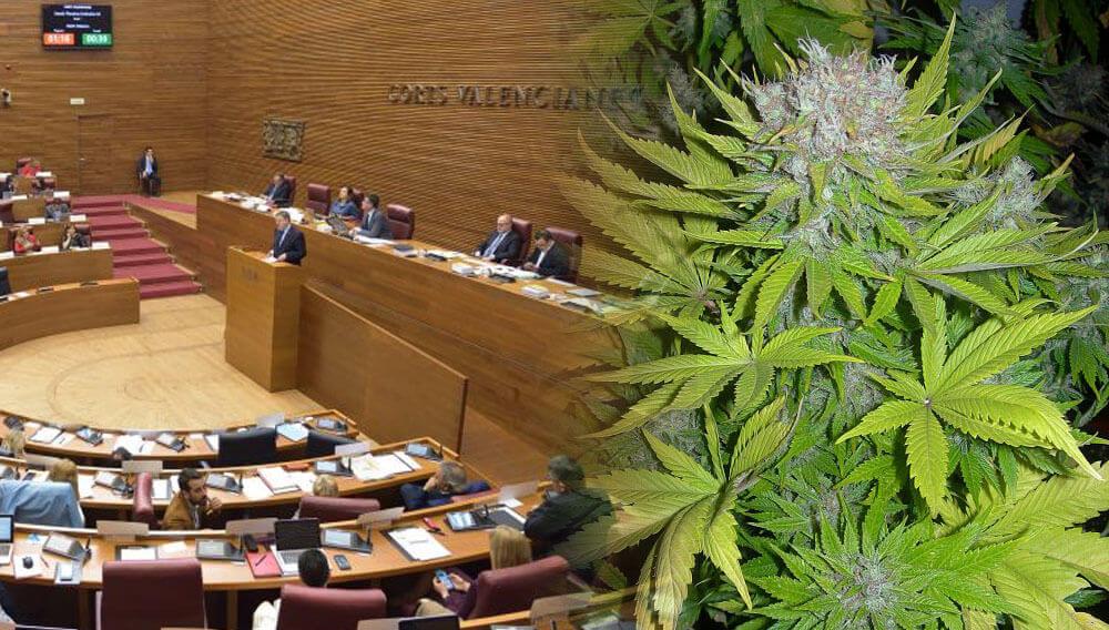 Cortes valencianas y marihuana